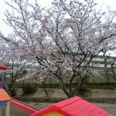 桜も満開!!