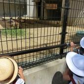 柵の向こうはカンガルー