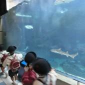 サメ 発見