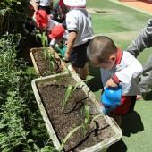 お野菜を植えたよ。大きくな~れ!