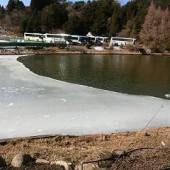 池の半分が凍っていました