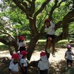 大きな木登りに挑戦!