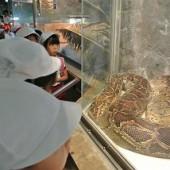 ニシキヘビ!太い・・・。
