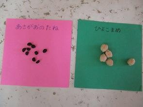 いろいろな種を比べました。