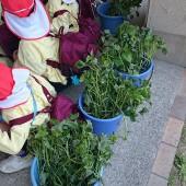 4つのバケツに今日の芋の苗が入っていました。高校生が順番に子どもたちの分を取ってくれました。