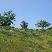 雲一つ無く、風もほぼなく。うぐいすの泣き声が谷側から聞こえてきます。