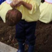 わあ~こんな丸いお芋が出てきたよ。