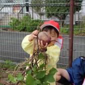 芋の蔓もひっついてきました。