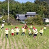 年長組は稲刈りをした田んぼでかけっこもしました。