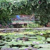 モクレンの池でバードショーを見ました