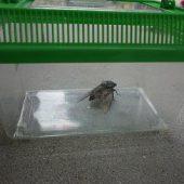 虫かごに入れてみんなで観察しました。観察した後はみんなバイバイしたよ。
