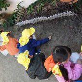 年少組は園庭でどんぐり拾い。嬉しそうに拾っていました。