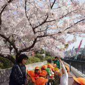 桜が満開でとても綺麗でした。