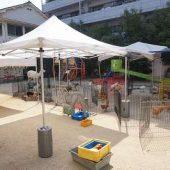 幼稚園にたくさんの動物がやってきました。