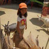 動物に触れて温かさを感じました。