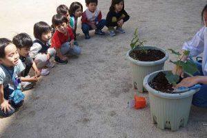年中組 キュウリの苗を植えました。