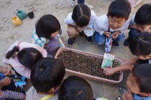 インゲンの種も植えました。