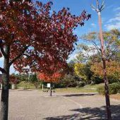 木々も色づき季節の変化を感じます。