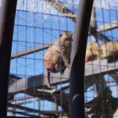 サルも興味津々で見ていました。