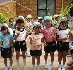 子どもたちは、『お米ってこうやってできるんだね!』と稲穂に興味津々でした・・・