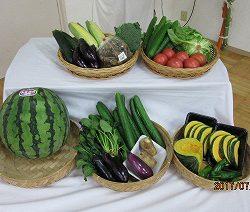 夏に取れる美味しい夏野菜♪夏野菜は夏の太陽の日差しを浴び、そして、たっぷりのお水でますます大きく美味しく育つんだよ!と先生からお話を聞いた子どもたちは、野菜に興味深々♪どの野菜も美味しそう♪