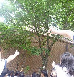 夏の桜の木を見にいきました。