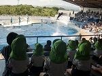 初めはイルカショー。イルカのジャンプを身を乗り出して見ていました。