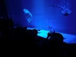 青い水槽が神秘的でとっても素敵✩