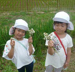 草花遊びを楽しみました♪