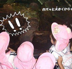 さあ、水族館を見学です!まずはオオサンショウウオ!