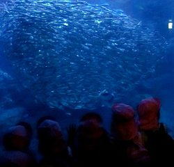 「うわ~!イワシの大群!!」エイやサメも泳いでいました。