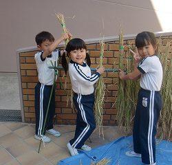 昨日収穫したお米を干しました