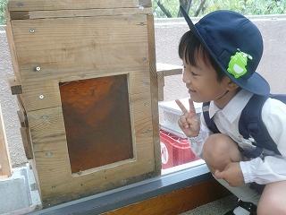 蜂の巣をみました☆立派ですね!!