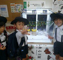 今日蝶になった蝶が展示されていました!!