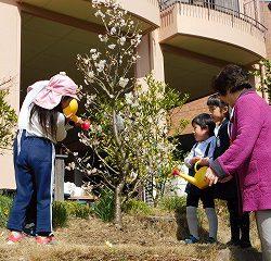 お誕生日プレゼントは『さくらんぼの木』です。歴代の先生・現役の先生たちより贈りました♪