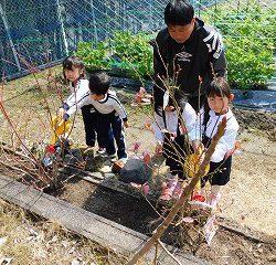 ブルーベリーの木も植えました♪たくさん実ができるのが楽しみです♪