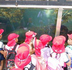 アマゾンに住む大きな魚にこども達は目がテン!!ゆっくり泳ぐ姿をじーっと見ていました!