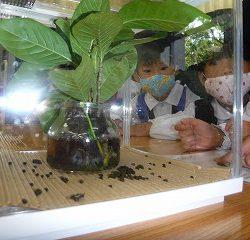 生きている幼虫やさなぎも展示していました。
