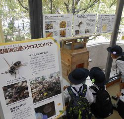 クロススズメバチの巣が見られるところもありました!!普段見られないところを見れてよかったね♪
