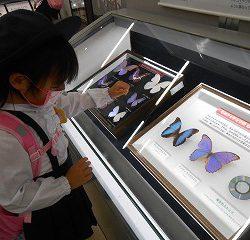 綺麗な蝶や・・・