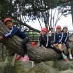 木に登ってみたり(^v^)