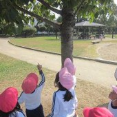 「あそこ見て見て!木の上!」