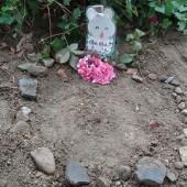 ぴょんぴょんくんのお墓にそっと手を合わす子どもの姿がありました