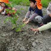 土をかけて植えました