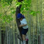 木登りもしたよ