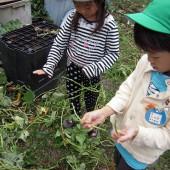 そのつるの葉っぱを手で摘みます