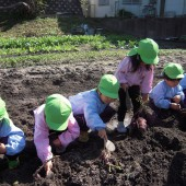 年少組はていねいに掘っていきます