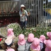 年少組は育ててみたい野菜の苗を植えました