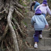 木の根っこに注意して登る登る